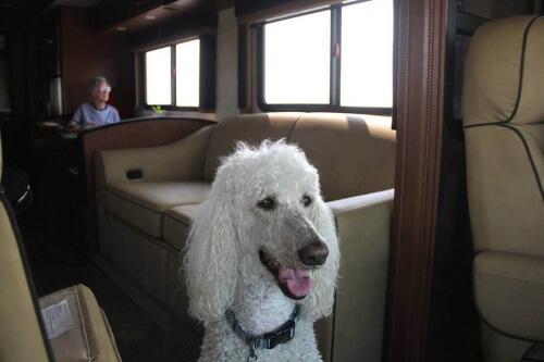 Norma, la vecchietta che girava gli Stati Uniti con il suo cane