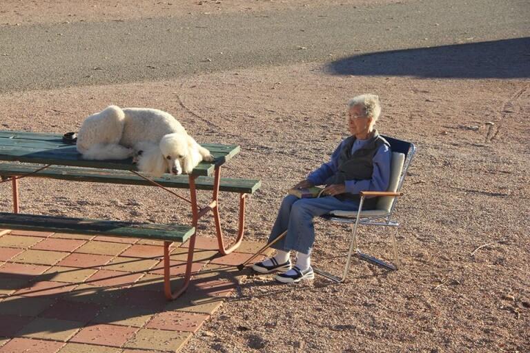 donna-di-90-anni-in-viaggio-con-il-cane