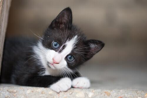 Guida all'adozione di un gatto di strada