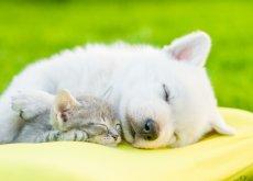 il-riposo-per-gli-animali
