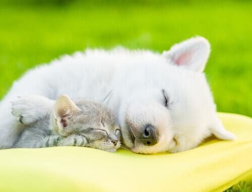 L'importanza del riposo per gli animali domestici