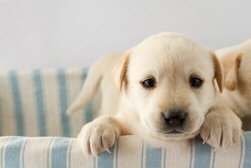 Sapete quanto è importante l'imprinting nella vita di un cane?
