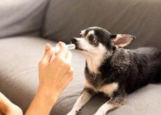 malattie-cane-riceve-farmaco
