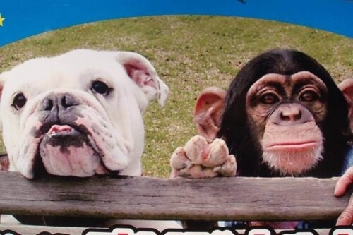 Pankun e James: una scimmia e un cane re del web