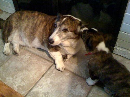 proteggere-il-cane-dallotite