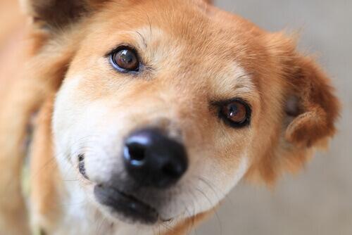 Come schiarire le macchie da lacrimazione del cane