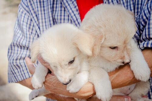 uomo-con-cuccioli