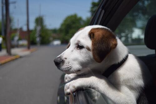 10 consigli per non farvi rubare il cane