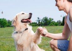 cane e padrone felici