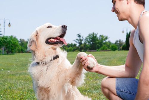 Il vostro cane capisce se siete felici o arrabbiati