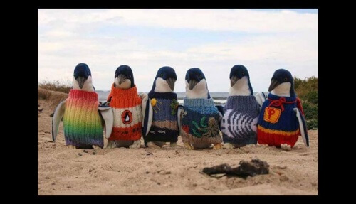 maglioni-per-i-pinguini