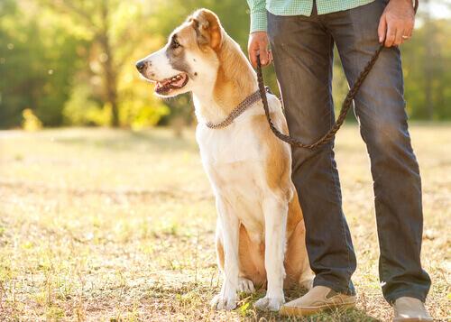 5 trucchi per eliminare i peli del cane dai vestiti