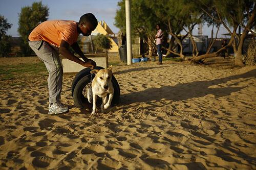 I cani a Gaza hanno finalmente un rifugio