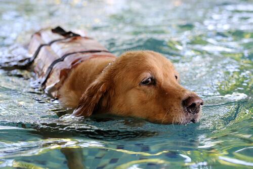 cane-che-nuota