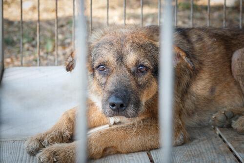 cane-chiuso-in-gabbia