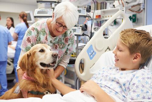 Cane con bambino in ospedale per pet therapy