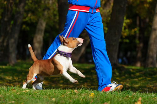 cane-corre-col-padrone