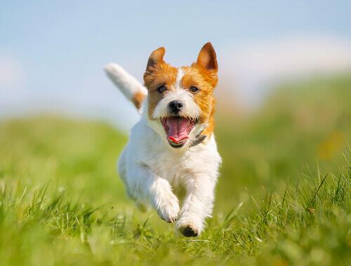 5 rimedi contro la stitichezza del cane
