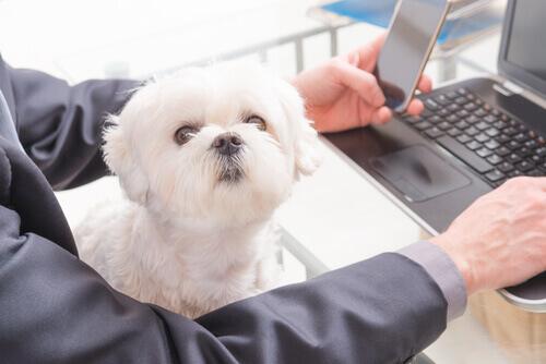 cane-davanti-al-computer