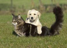 ustioni cani e gatti