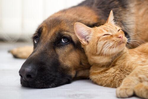 È l'Argentina il paese con più animali domestici pro capite