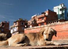 numero cani al mondo