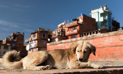 Quanti cani ci sono al mondo?