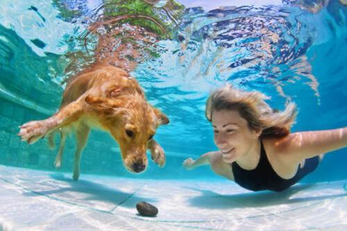 Grazie ad un'invenzione russa i cani potranno respirare sott'acqua