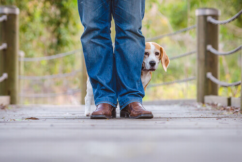 Cane che ha paura si nasconde dietro alle gambe del padrone
