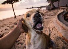 assicurazione per cani