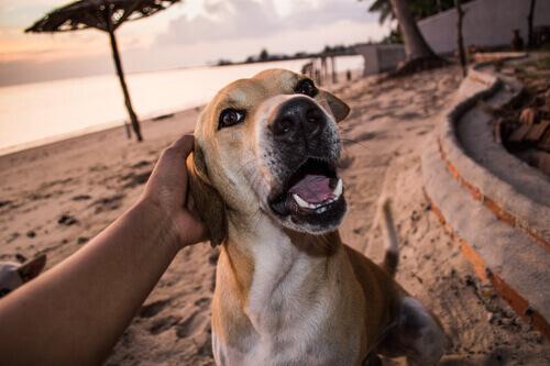 uomo accarezza cane sulla spiaggia