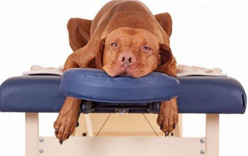 Spa per animali domestici: anche loro hanno il diritto di rilassarsi!