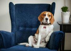 cane dallo psicologo