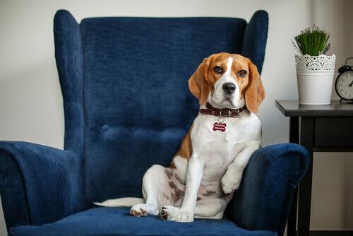 I benefici di portare i vostri animali domestici dallo psicologo