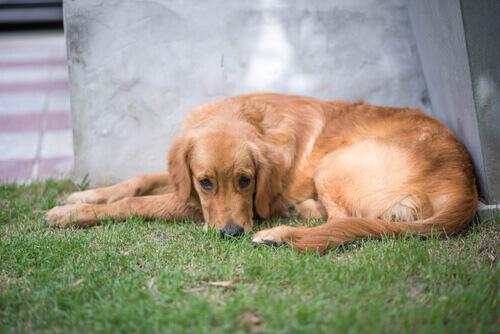 cane triste ha bisogno psicologo