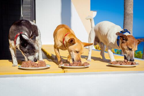 cani-che-mangiano