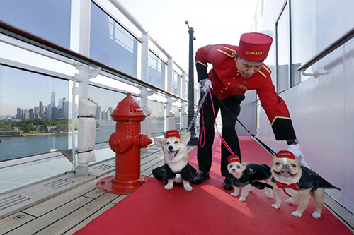 La nave da crociera Queen Mary ora è Pet Friendly!