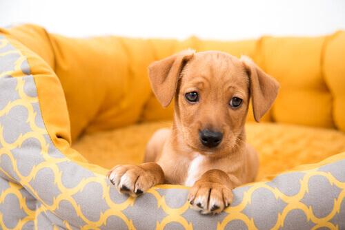 cane comprato da un privato