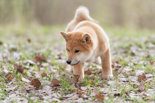 abilità cane