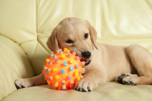cucciolo-morde-giocattolo