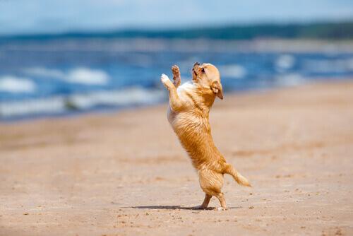 Conoscete la dog dance?