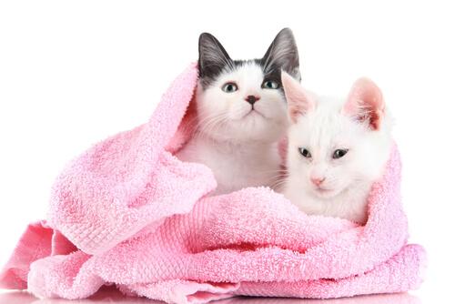 gatti-in-asciugamano