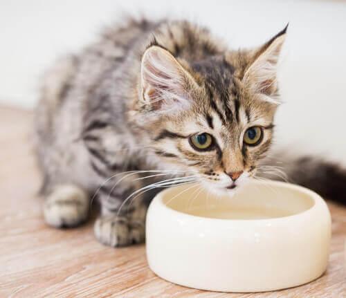 gatto-beve-alla-ciotola