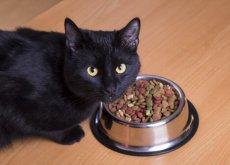 gatto-con-ciotola-di-cibo