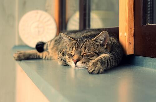 gatti dormono di giorno