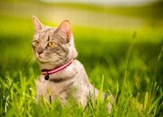 rafforzare legame con il gatto