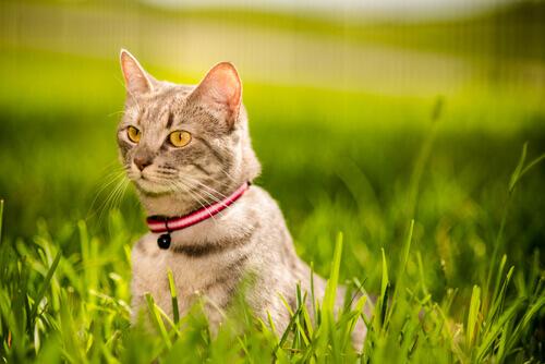 Punti fondamentali per rafforzare il legame con il vostro gatto