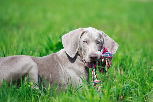 giocattolo-per-cani