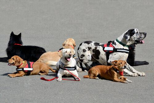 """""""Crescere Insieme"""": terapia animale per i bambini"""