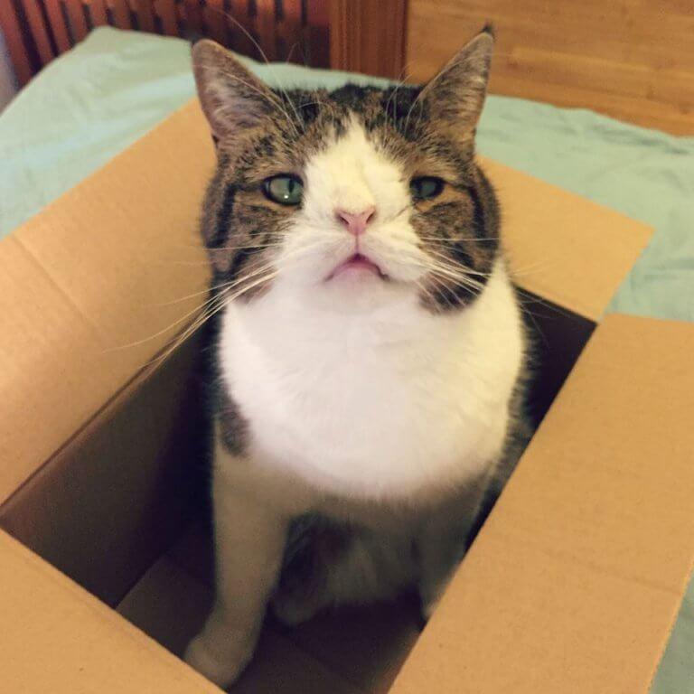 monty-gatto-con-anomalia-genetica